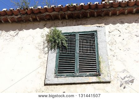 An overgrown window in the old city of Funchal