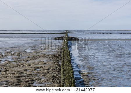 Coastline of the Waddensea at Friesland wit mud flats and protection poles and dikes.