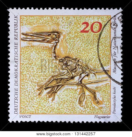 ZAGREB, CROATIA - SEPTEMBER 09: A stamp printed in GDR shows Pterodactylus kochi, Natural History Museum Pieces, circa 1973, on September 09, 2014, Zagreb, Croatia