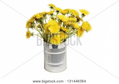 Yellow dandelions in a tin isolated on white