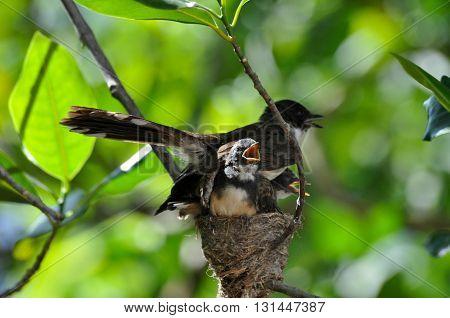 A family of bird on their nest