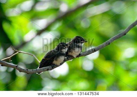 two young birds hold on a twig