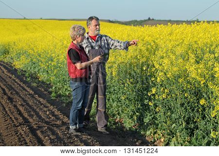 Farmer and agronomist examine blossoming rapeseed field using tablet