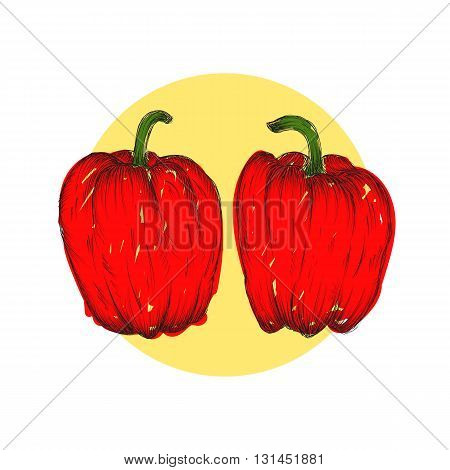 Vector engraving illustration of highly detailed hand drawn bell peppers isolated on white background