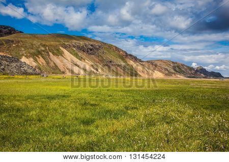 The picturesque valley in national park Landmannalaugar. Summer in Iceland. Green grass among thermal sources