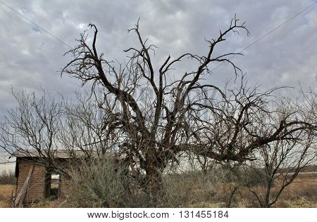 Creepy Abandoned House with Ominous Dead Trees