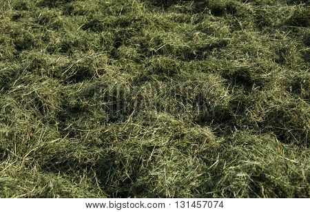 Lot of a hay on the field