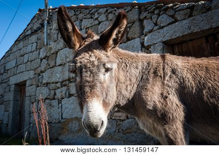 Donkey portrait in a rural village, Avila, Spain