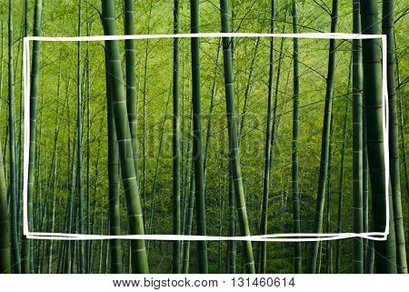 Bamboo Forest China Nature Concept