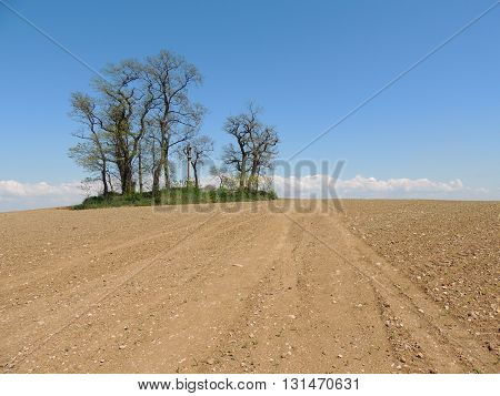 Plowed field looking like desert with small oasis and statue
