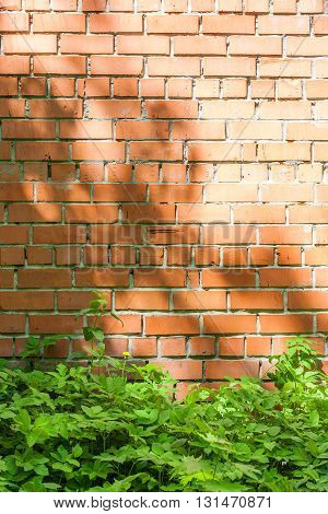 red brick wall with patches of light from the sun and green grass at the foot of the wall