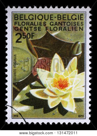 ZAGREB, CROATIA - JULY 03: A stamp printed in Belgium from the Ghent Flower Show issue shows Water Lily, circa 1970, on July 03, 2014, Zagreb, Croatia