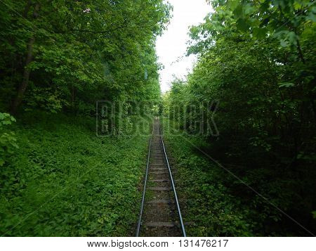 Old rusty railway tracks disappearing into the woods