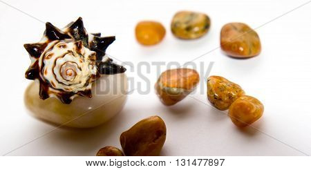 cockleshells,  white colors of a background, stones, several stones,