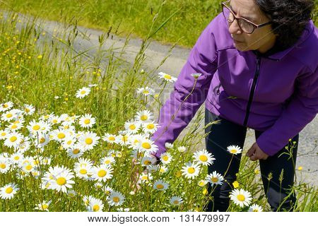 a hiker woman picking daisies in a meadow