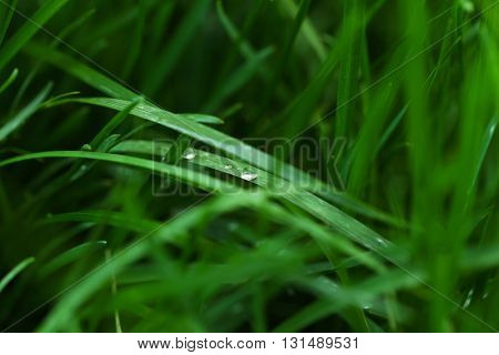 Green grass background, closeup