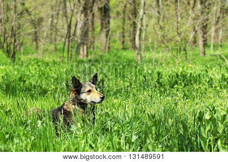 Dog in fresh green grass, close up