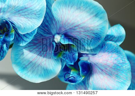 Beautiful blue orchid flowers, close up