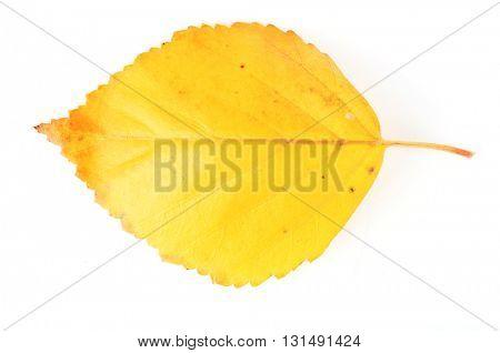 Beautiful autumn leaf, isolated on white