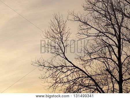 nightfall background with the tree and sky