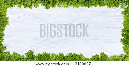 New fir tree tips forming complete border on white wood. Christmas or New Year concept. Plenty of copy space in middle of border.