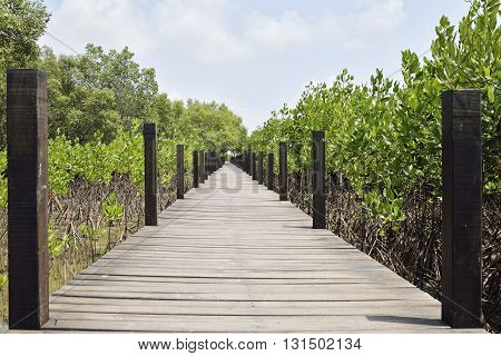 Walkway made from wood and the mangroves . Boardwalk in mangroves field Rayong Thailand.