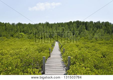 Walkway made from wood and mangrove field. Boardwalk in Tung Prong Thong Golden Mangrove Field Rayong Province Thailand.