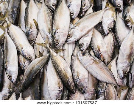 Fresh mackerel fishes in the market Thailand.