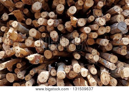 Pile Of Wooden Stump As Background