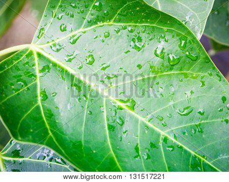 a selective focus of rain drops on green grass leaves and natural green blurred background
