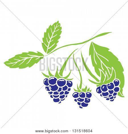 blackberry cartoon illustration
