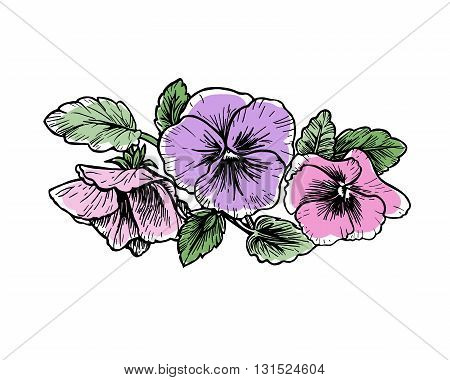 Hand drawn pansy flowers. Graphic style vector illustration.