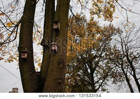 Wooden Birdhouse In A Tree At Autumn