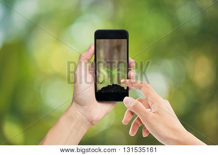 Hands holding smart phone growth tree on green background.