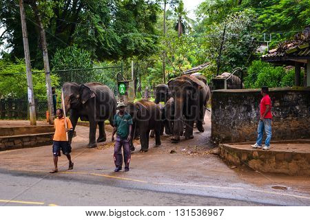 Travel in Sri Lanka. Wildlife on Ceylon