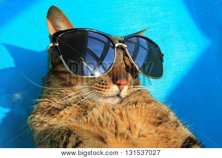 funny tabby cat wearing sunglasses relaxing on a beach chair on vacation, summer holidays
