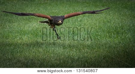 Hawk, caracara, eagle, falcon, kestrel in monasterio de piedra, Zaragoza, Aragon Spain