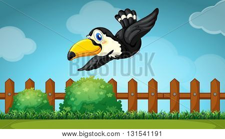 Toucan flying over the field illustration