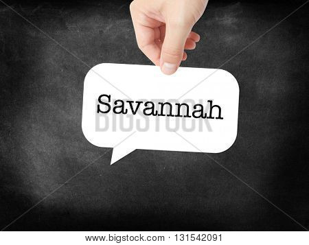 Savannah written on a speechbubble