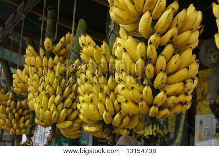 Bananas hanging in a market