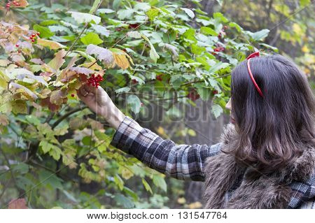 Young pretty woman in coat with snawball tree berries