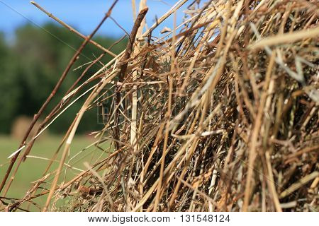 Closeup on a stack of straw for an agriculture background