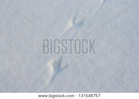 Bird traces on white snow in winter season