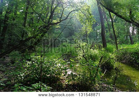 View of the swamp with trees in the in the backlite nature greenery