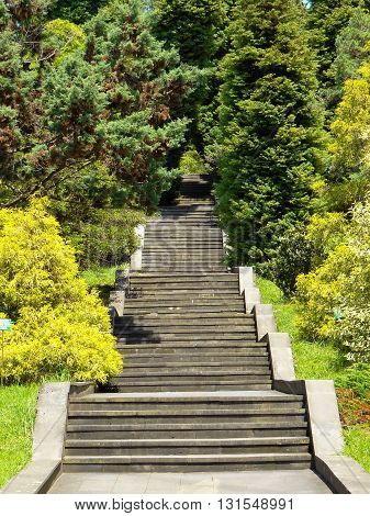 beautiful stairs in parkland rising to the top among the trees, Sochi city