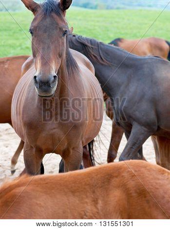 Horse portrait. Animals graze in a pasture.