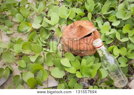 Ipomoea Pes-caprae Plant Or Goat's Foot Creeper With The Bottle And Coconut , Save The Earth Concept