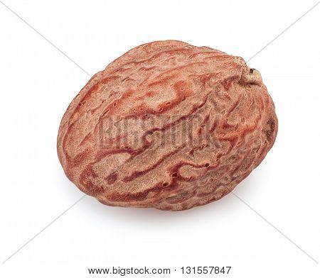 Macro of nutmeg isolated on white background. Single nutmeg whole isolated on white background