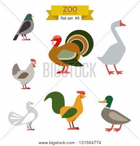 Flat design vector birds icon set