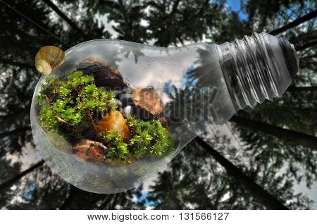 Save Nature World light bulb with forest background